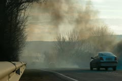 Forest fire on the roadside - stock footage