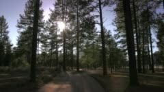 Forest view in natural park reserve Stock Footage