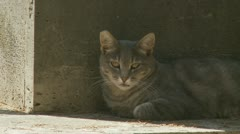 A cat in a grave yard Stock Footage