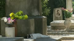 Cat in Rome cemetery (one) Stock Footage