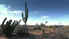 Cactus in Desert California Stock Footage
