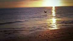 Bird in Sky Ocean Stock Footage