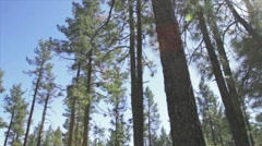 Forest view shot with steadicam Stock Footage