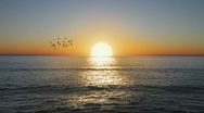 Stock Video Footage of Beautiful Golden Ocean sunset with flock of birds