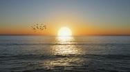 Beautiful Golden Ocean sunset with flock of birds Stock Footage