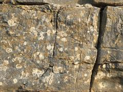 Rock Texture Stock Photos