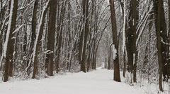 Tilt of Long Snow Covered Trail in Woods - stock footage