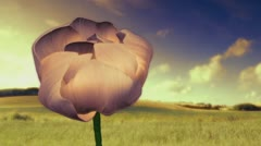 Flower in the Breeze Stock Footage