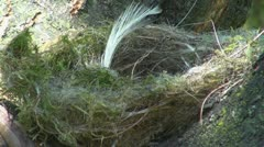 A small nest Stock Footage