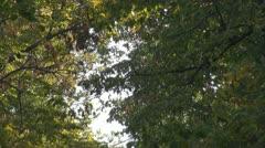 Romantic tree alley Stock Footage