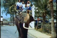 An elephant ride at the Rose Garden in Bangkok Stock Footage