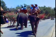 An elephant ride at the Rose Garden in Bangkok, two elephants pass each other - stock footage