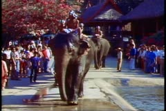 The elephants of the Rose Garden in Bangkok arrive - stock footage