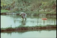 The New Territories, Hong Kong, man planting rice in rice paddies Stock Footage