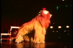 Hong Kong cultural show, lion dragon dance Stock Footage