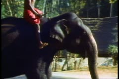 The elephants of Sri Lanka, passing on the road Stock Footage