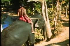 The elephants of Sri Lanka, two walk up a hill Stock Footage