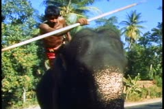The elephants of Sri Lanka, dismounting two elephants Stock Footage