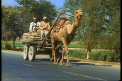 A Camel pulling a cart in India Stock Footage