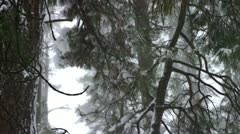 Frozen Pine Tree 4 Stock Footage