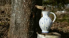 Fresh  maple sap in the pitcher Stock Footage