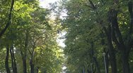 Romantic tree alley Stock Footage