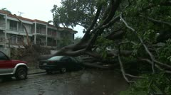 Car Crushed By Tree During Hurricane Stock Footage