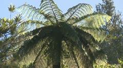 Black fern Stock Footage