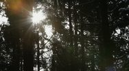 Stock Video Footage of sun rays through the forest