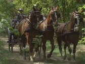Horse drawn carriage landauer towards camera 03 Stock Footage
