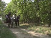 Horse drawn carriage landauer towards camera 02 Stock Footage