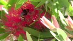 Red Flowers and a Bee - stock footage