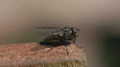 Fly takes off from wood Stock Footage