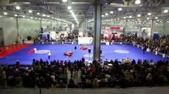 Crowd watch dog agility in large exhibition hangar - stock footage