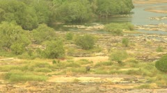 River Dry with Elephant Stock Footage