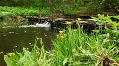 Dandelions on green grass at background of small waterfall Stock Footage