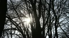 Sunset Behind Crazy Trees Stock Footage