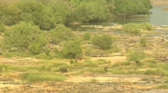 River Dry with Elephants Stock Footage
