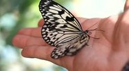 Butterfly on the human hand Stock Footage