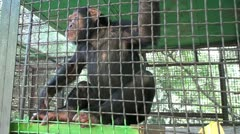 Monkey In A Cage HD - stock footage
