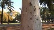 Stock Video Footage of 044# Hebrew caption eucalyptus tree