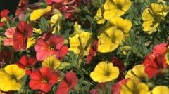 Flowers closeup Stock Footage