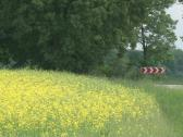 Bloom oilseed rape field Stock Footage