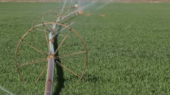 Green Grass Irrigation - stock footage