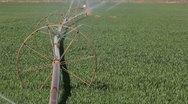 Green Grass Irrigation Stock Footage