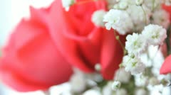 Coral Roses Stock Footage
