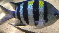 Fish at sea bed 7 - stock footage