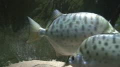 Fish at sea bed 9 - stock footage