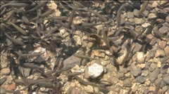 Fishes Stock Footage