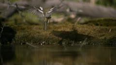 Slow motion wildlife footage (002-23) Stock Footage